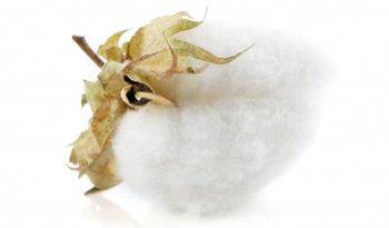 Tote bag : quel est le coton à privilégier ?